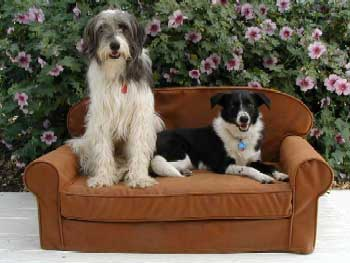 "Siblings (that's right!)  ""Monty"" and ""Mollie"" posing on a Large Classic Critter Couch in machine-washable faux leather."
